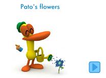 Florile lui Pato
