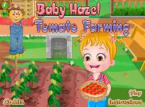 Hazel Cultiva Rosii
