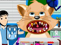 Pisica la Dentist