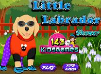 Spala Labradorul