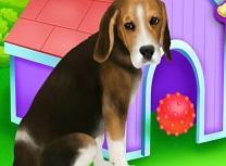 Ingrijiti Catelul Beagle