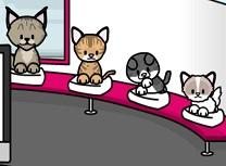 Salon de Ingrijit Pisici