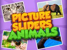 Slider de Poze cu Animale