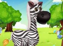 Zebra Draguta la Salon